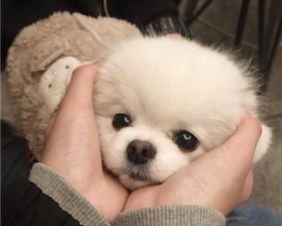 好听又沙雕的宠物狗名字_WWW.QQYA.COM