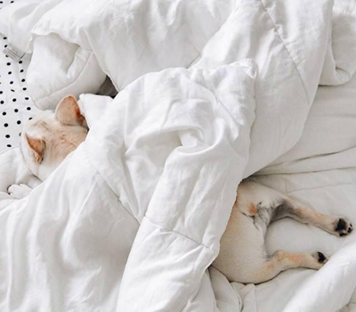 寓意好的宠物猫名字_WWW.QQYA.COM
