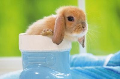 温顺娴静宠物兔兔的名字_WWW.QQYA.COM