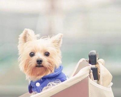洋气高大上的宠物狗狗名字大全_WWW.QQYA.COM