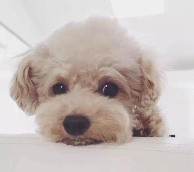 给狗狗取个幸运的名字_WWW.QQYA.COM