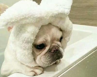 有点闹腾的宠物狗名字_WWW.QQYA.COM