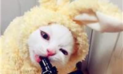 高大威猛宠物名字霸气_WWW.QQYA.COM