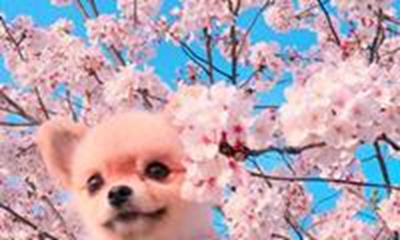 让人眼前一亮宠物好听的独特名字_WWW.QQYA.COM