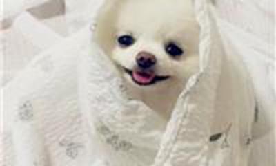 顺口洋气的宠物名字_WWW.QQYA.COM