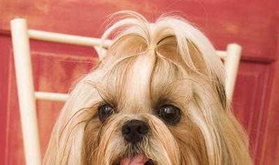 2021带财运的狗名_WWW.QQYA.COM