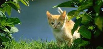 公猫带好运的名字_WWW.QQYA.COM