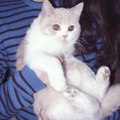 抱着猫的闺蜜头像_WWW.QQYA.COM