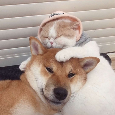 狗狗和猫猫的情侣头像_WWW.QQYA.COM