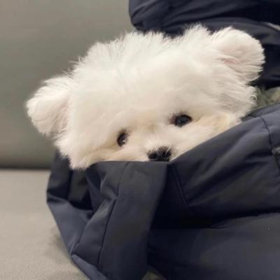 可爱小狗小猫头像_WWW.QQYA.COM