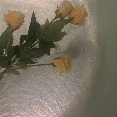 唯美好看玫瑰花头像图片大全_WWW.QQYA.COM
