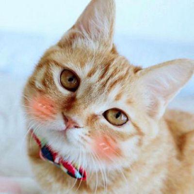 一左一右猫狗情侣头像_WWW.QQYA.COM