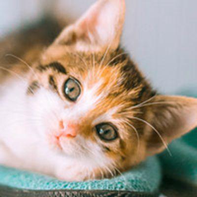 可爱猫咪写真图片头像大全_WWW.QQYA.COM