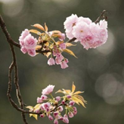 适合做头像的花朵图片_WWW.QQYA.COM