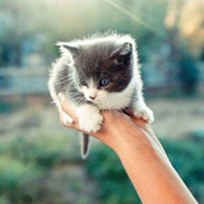 可爱萌宠小猫头像图片大全_WWW.QQYA.COM