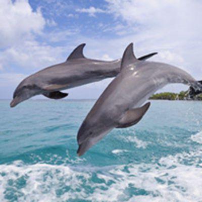 海豚头像_WWW.QQYA.COM
