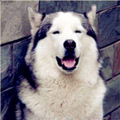 宠物小狗图片大全可爱头像_WWW.QQYA.COM