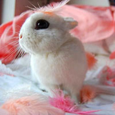 可爱小白兔头像图片_WWW.QQYA.COM
