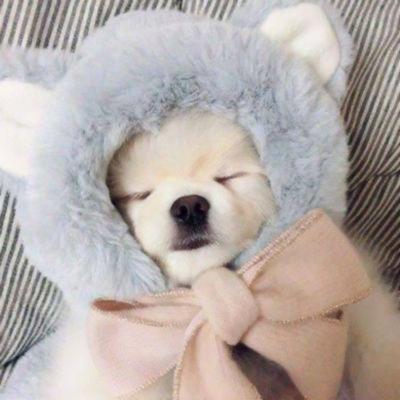 二货狗狗头像图片_WWW.QQYA.COM
