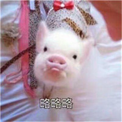 可爱猪搞笑头像带字图片_WWW.QQYA.COM