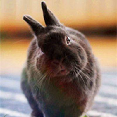 小小兔子微信头像_WWW.QQYA.COM