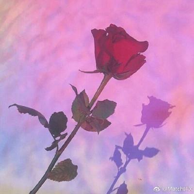 微信头像花朵图片大全_WWW.QQYA.COM