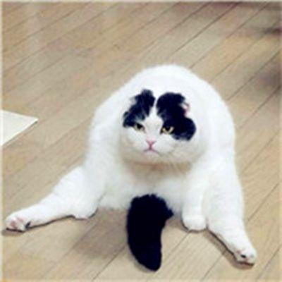 大肥猫头像_WWW.QQYA.COM
