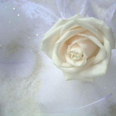 唯美意境一朵花头像图片_WWW.QQYA.COM