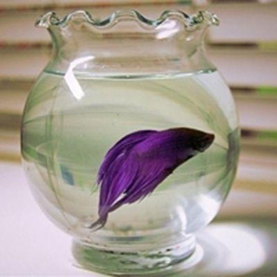 可爱的小鱼头像_WWW.QQYA.COM