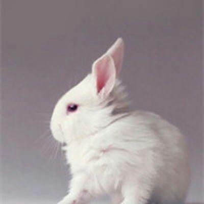 可爱漂亮的兔宝宝头像_WWW.QQYA.COM