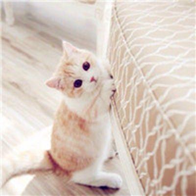 可爱超萌小奶猫头像图片_WWW.QQYA.COM