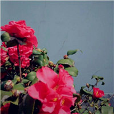 最好看的花朵微信头像_WWW.QQYA.COM
