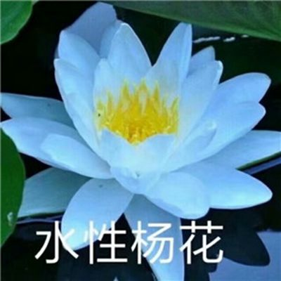 莲花微信头像图片大全_WWW.QQYA.COM