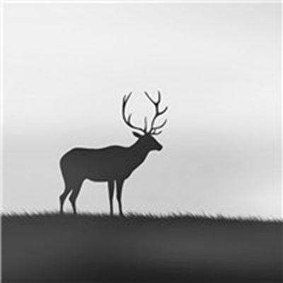 森系鹿头像图片大全_WWW.QQYA.COM