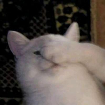 猫的情侣头像一左一右_WWW.QQYA.COM