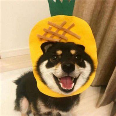 柴犬情侣头像一左一右_WWW.QQYA.COM