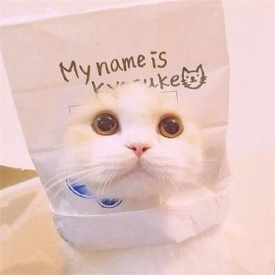 好看的微信猫咪头像超可爱_WWW.QQYA.COM