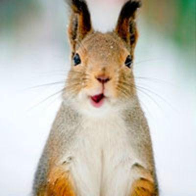 小兔子头像_WWW.QQYA.COM