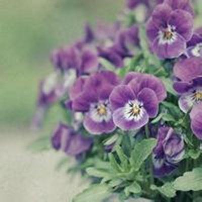 小清新花朵头像唯美意境图片大全_WWW.QQYA.COM