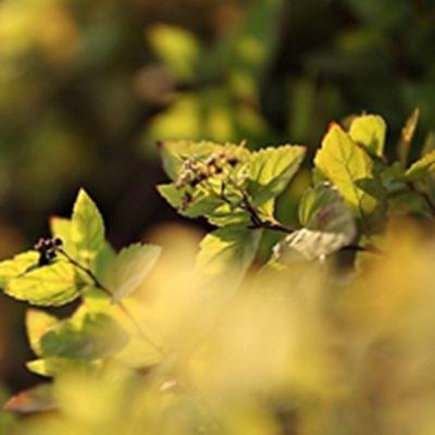 树叶头像图片大全_WWW.QQYA.COM