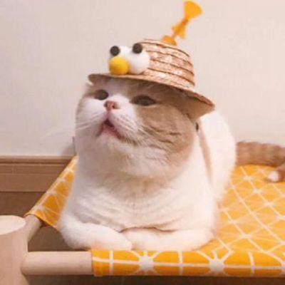 两只猫咪情侣头像图片_WWW.QQYA.COM