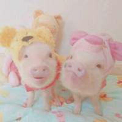 情侣猪头像_WWW.QQYA.COM