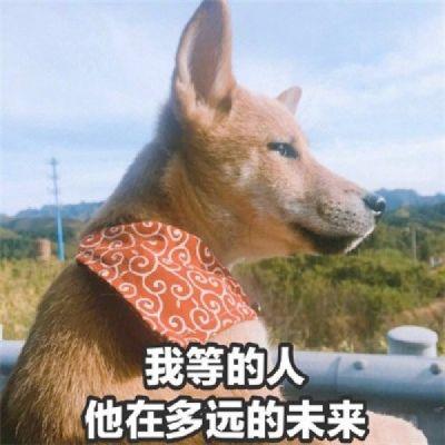 单身狗的图片头像_WWW.QQYA.COM