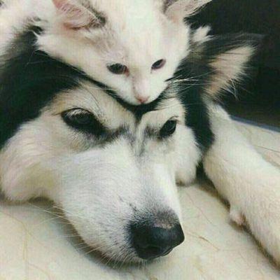 情侣狗狗头像一对两张_WWW.QQYA.COM
