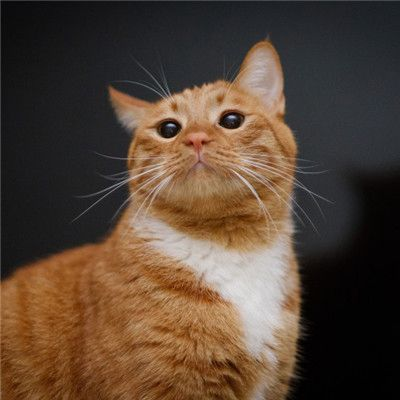 小猫头像_WWW.QQYA.COM