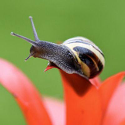 蜗牛头像图片_WWW.QQYA.COM