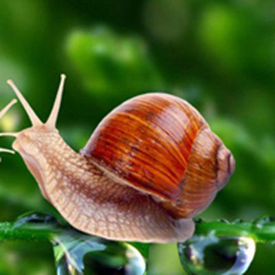 蜗牛头像_WWW.QQYA.COM