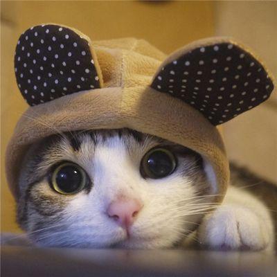 猫咪图片大全可爱头像_WWW.QQYA.COM