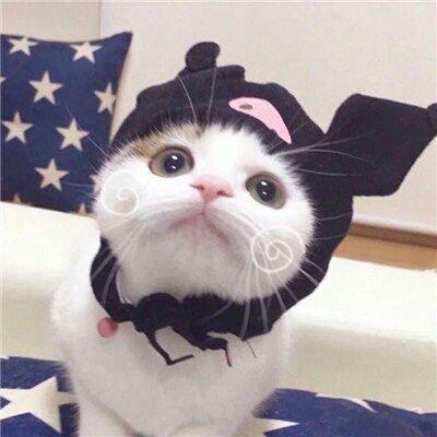 小猫情侣头像超萌_WWW.QQYA.COM