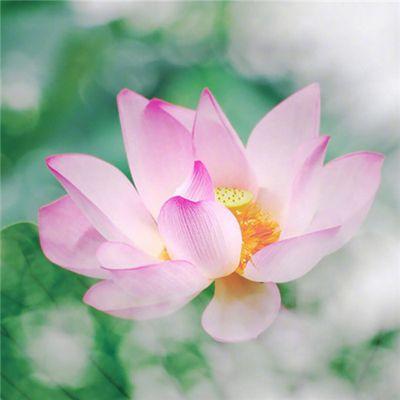 小清新头像植物图片大全_WWW.QQYA.COM